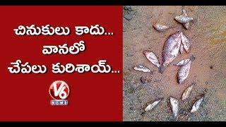 Fish Rain In Phethai Cyclone Effect Areas In Andhra Pradesh