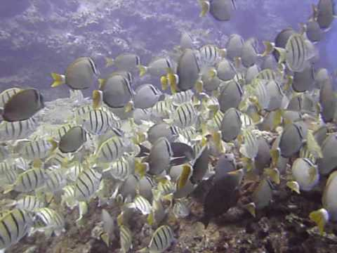 Convict Tang Wiki Convict Tang Manini