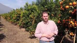 Fertilización en Cítricos - Montolin
