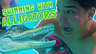 SWIMMING WITH ALLIGATORS!
