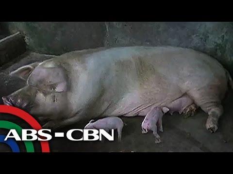 UKG: Umano'y Aswang, U... Larawan Ng Totoong Aswang