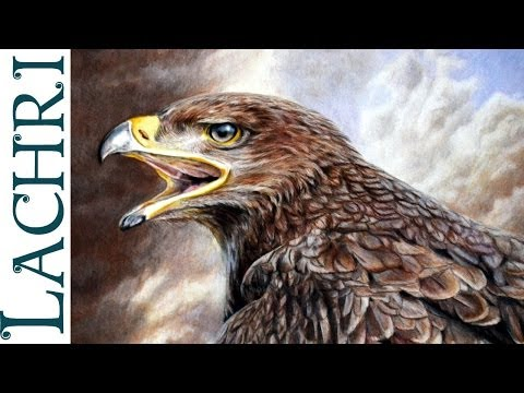 Drawing an Eagle w/ Faber-Castell Polychromos colored pencil - Photorealistic  Demo by Lachri