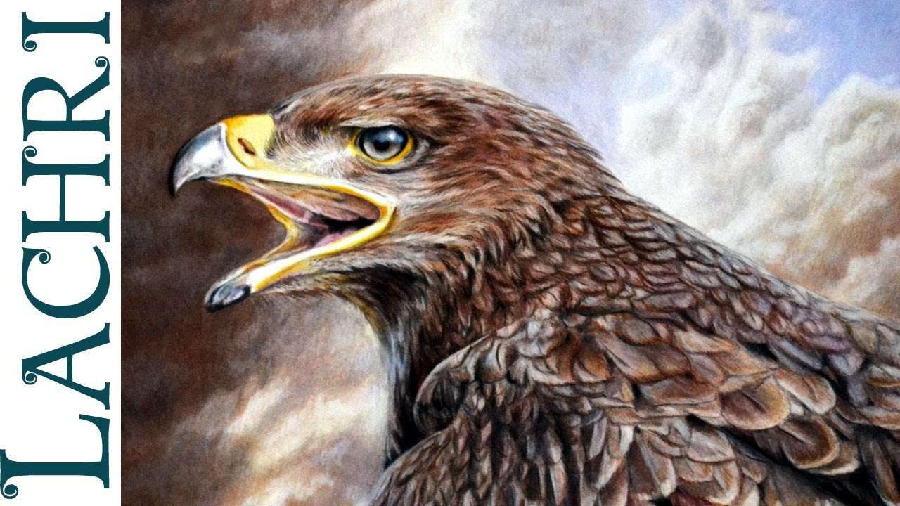 Faber Castell Pencils Drawings Drawing an Eagle w/
