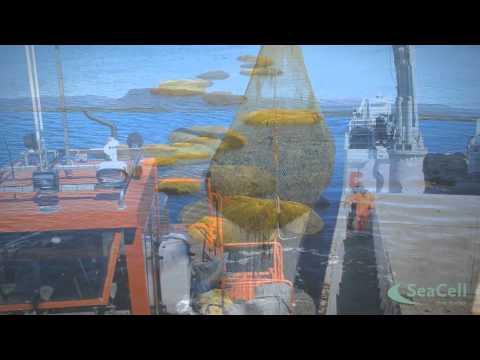 Von der Alge zur SeaCellFaser