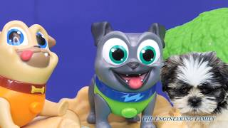 PUPPY DOG PALS Disney  Bingo Rolly Hide and Seek Surprise with Lion Guard Video Toy Parody