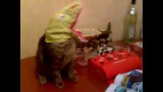 Dinocat - Cat Has A Dinosaur Mask On