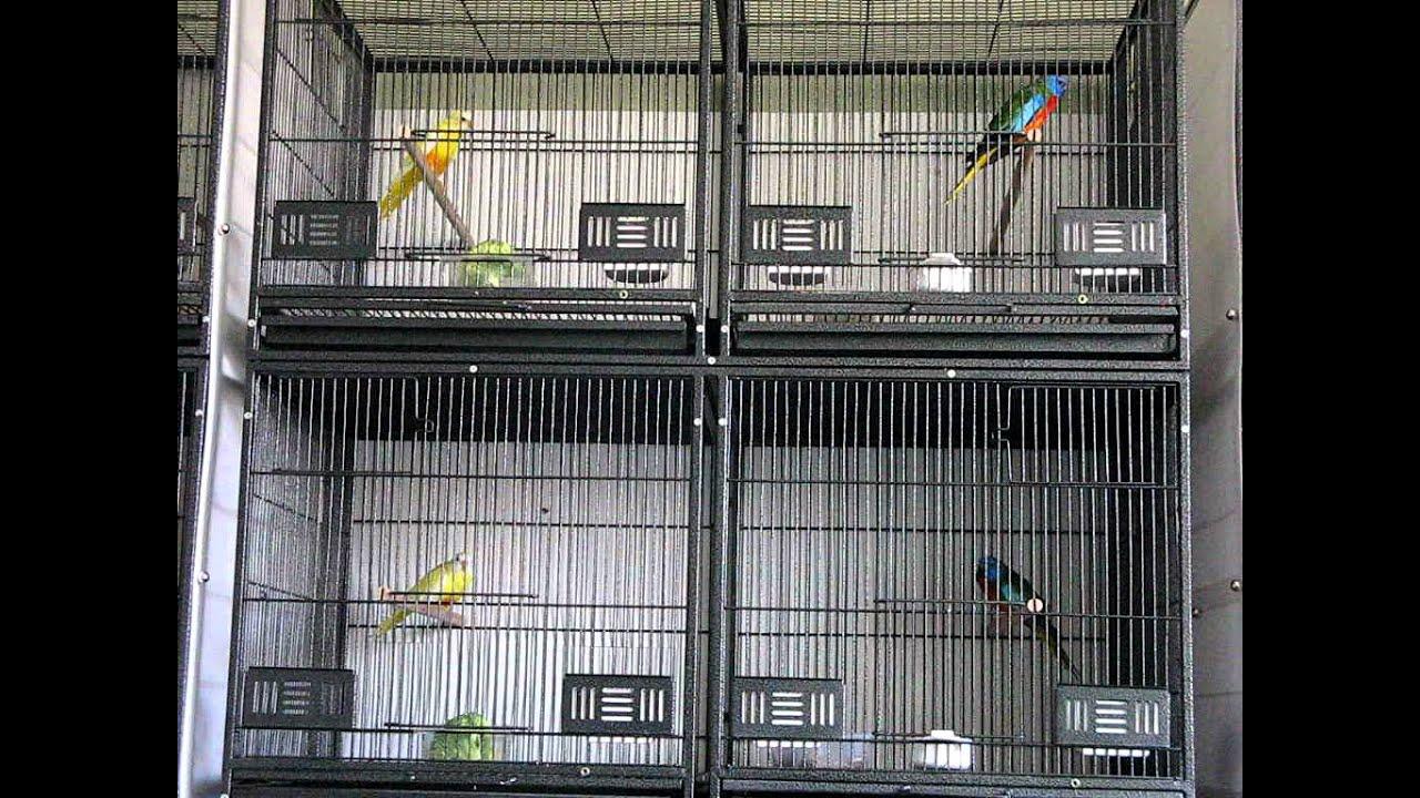 Splendid Parakeets