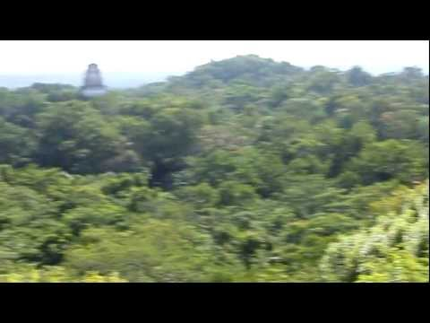 Tikal - Guatemala -  View from Temple IV - Temple of the Great Jaguar