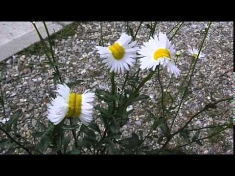 Earthcast SOS - Radioactive Fukushima Fallout