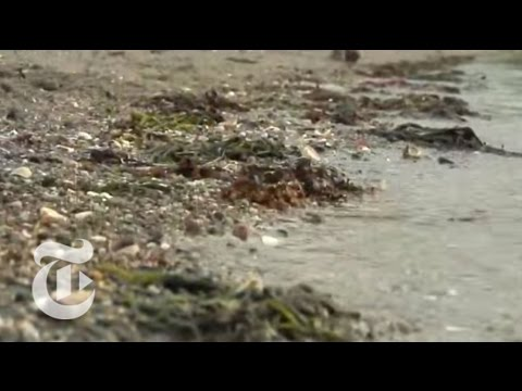 U.s.: Toxic Waters: Polluted Harbors - Nytimes video video