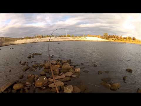 STRIPED BASS fishing in November - 247 OutDoor Addiction