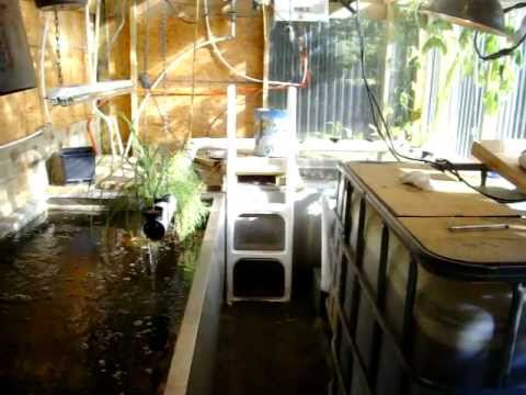Back Yard Tilapia Fish Farm Setup 2 Update