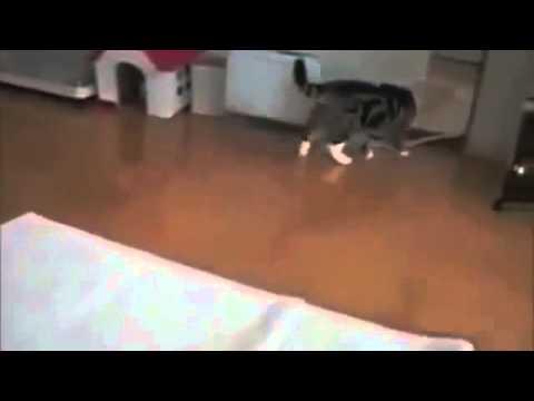 CRAZY CAT GATTI PAZZI & SIMPATICI   BY CAMINITO