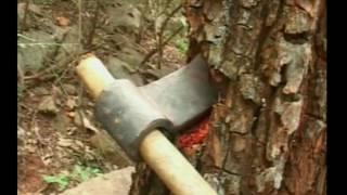 TIRUMALA YERRA CHANDANAM RED SANDAL TREES CUTTING తిరుమలలో యెర్ర ఎర్ర చందనం చెట్ల నరికివేత