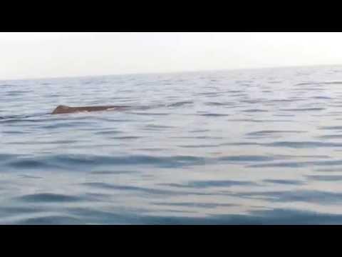Whale Watching in Trincomalee Sri Lanka