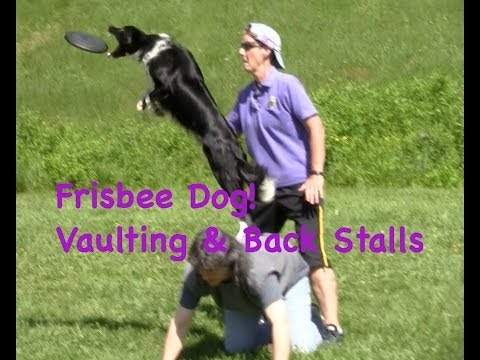 Frisbee Dog Training: Vaults & Stalls video