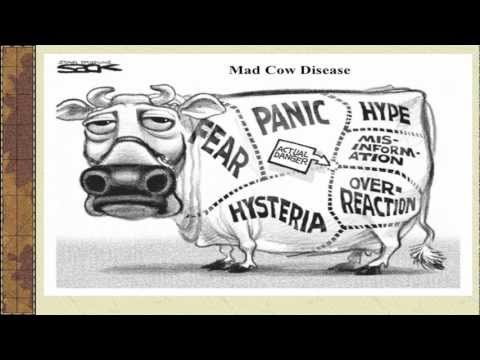 mad cow disease past present essay The past present and future of mad cow disease in the united states dspace/manakin repository bovine spongiform encephalopathy: the past present and future of mad cow disease in the united states: hls student papers.