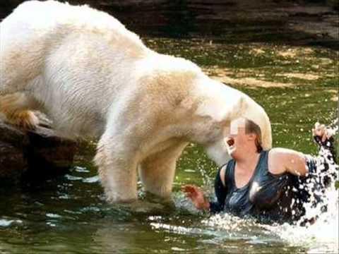 cumbia sonideras me roba el oso polar