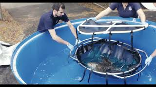Hammerheads and Eagle Rays arrive at Point Defiance Zoo & Aquarium