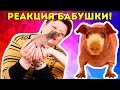 Реакция БАБУШКИ на ЛЫСУЮ морскую свинку! / Бабушка реагирует / SvinkiShow