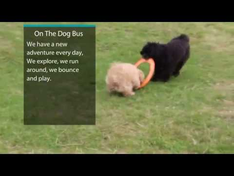 Professional Dog Walkers in Altrincham Ted & Tess Tug of Fresbee