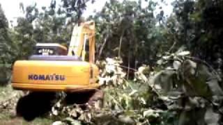 Download Lagu Hutan jati garuda Gratis STAFABAND