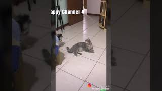 Funny cute animals : Tik Tok pets # and vigo video #