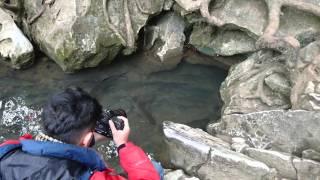 Suối cá thần Thanh Hoá