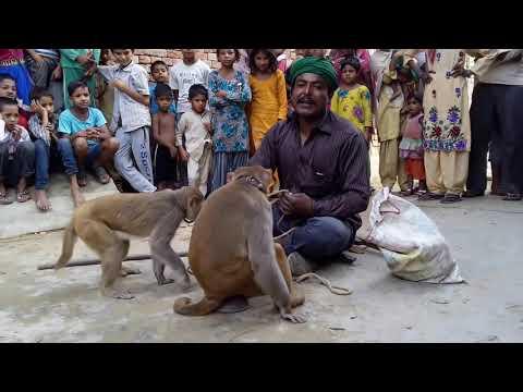 बंगाली जादूगर || बन्दर बंदरिया का खेल - केवल बच्चो के मनोरंजन के लिए- हमारे चैनल को सब्सक्राइब जरूर