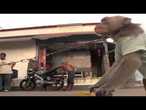 Jakarta Monkey Tour  Topeng Monyet