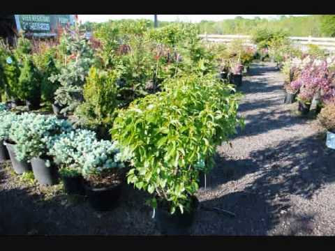 Super Trees and Shrubs for a changing Climate