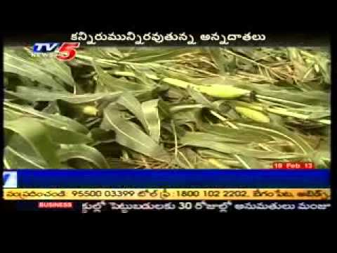 Untimely rains damage crops in AP - TV5