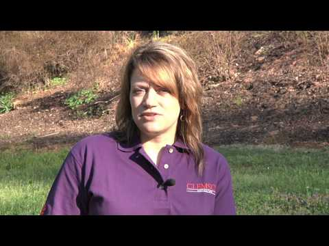 Annual Bluegrass Control in Lawns - Millie Davenport