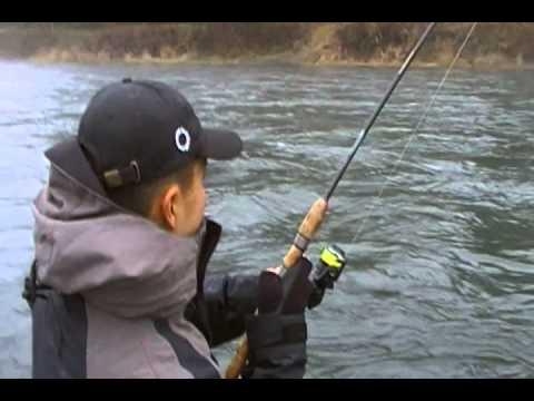 Huge Big Steelhead fishing Blue Creek