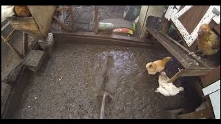 Best Way To Dry Out A Muddy Soggy Messy Wet Chicken Coop in Minutes - Perfectly Every Time!!!!!!