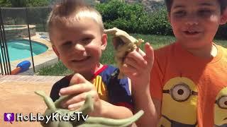 Dinosaur PEELING SKIN and Bones! Toy Review Family Fun Dinos HobbyKidsTV