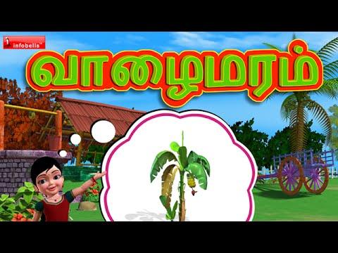 வாழைமரம், வாழைமரம் Tamil Rhymes For Children video