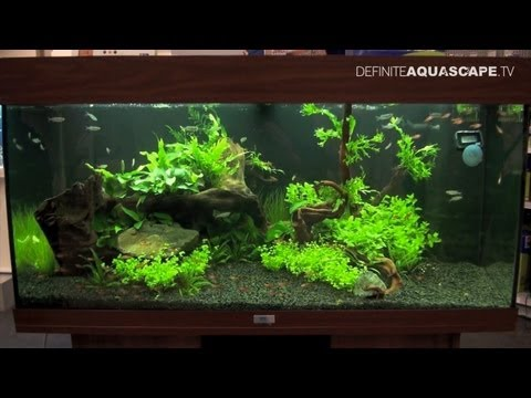 Aquascaping - Aquarium Ideas from PetFair 2013, �ódź, Poland, pt.8