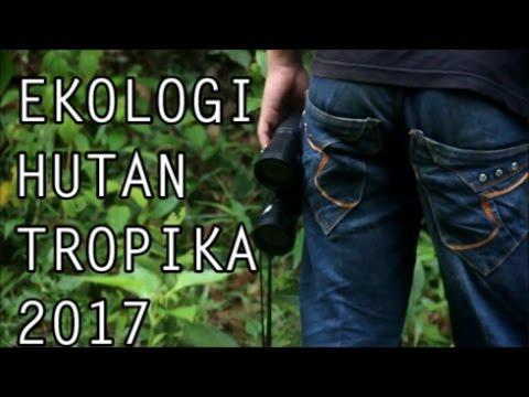 download lagu Kuliah Lapangan Ekologi Hutan Tropika 20 gratis