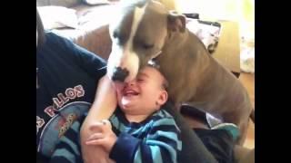 Les bisous de ce chien font rire bébé