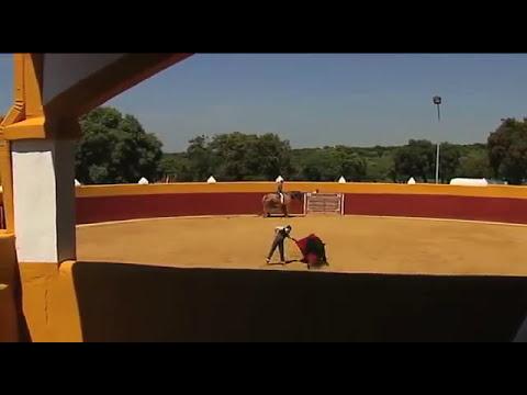 El Toro Bravo .turismo de la diputacion de badajoz.  dehesa y toro.