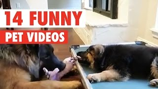 14 Funny Pet Videos Compilation 2017