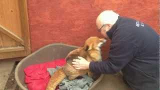 Geoff and Dawn - Lovely video - sweet, sweet fox and sweet man!