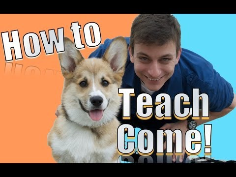 Come When Called: The Fastest Way To Teach Your Dog To Come When Called Anywhere! video