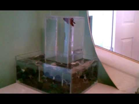 Upside down betta fish tank youtube for Inverted fish tank