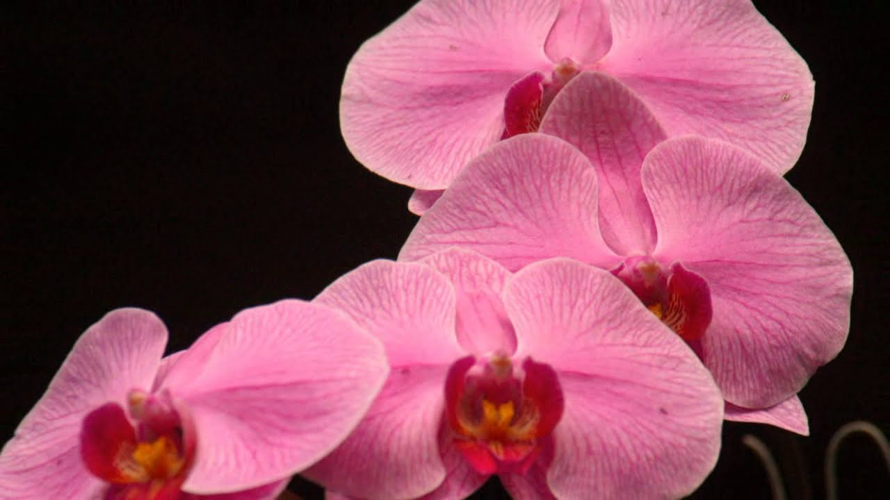 Jungle Flowers And Plants Jungle Plants Flowers Exotic