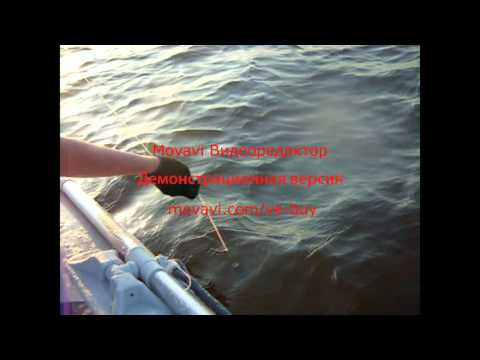 ловля сома на квок на припяти видео