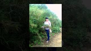 Nhạc sống-Nhớ Đêm Giã bạn- Đường về hai thôn (Xuân Hà)