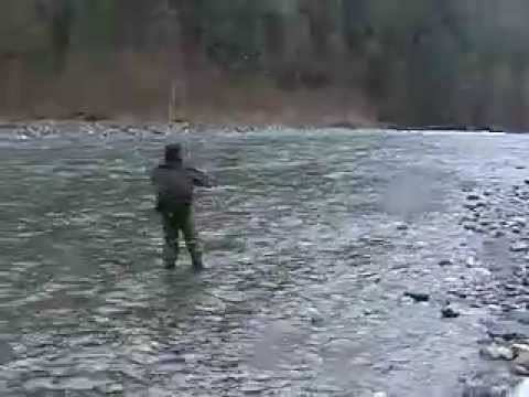 Vedder River Steelhead. Vedder River Steelhead Fishing Chilliwack BC(Angler: Colin Marshall). Vedder River Steelhead Fishing Chilliwack BC(Angler: Colin Marshall)