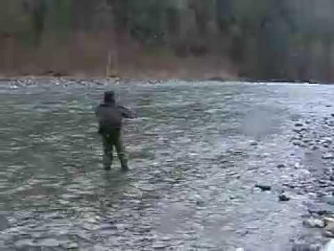 Vedder River Steelhead. Vedder River Steelhead Fishing Chilliwack BC(Angler: Colin Marshall). Vedder River Steelhead Fishing Chilliwack BC(Angler: Colin Marshall)